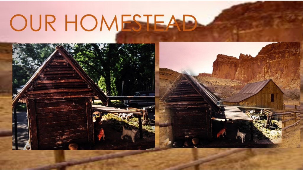 our homestead